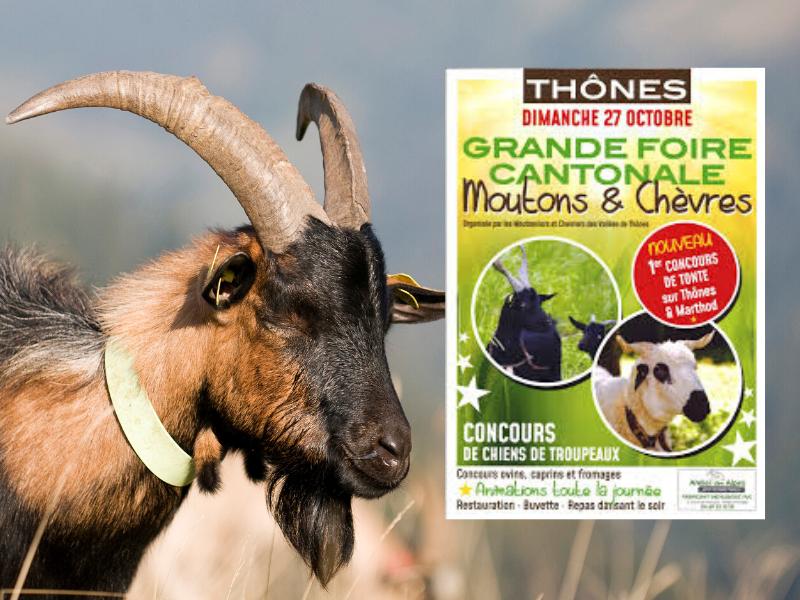 Fromage Chevrotin - Foire cantonale de Thônes chèvres et moutons