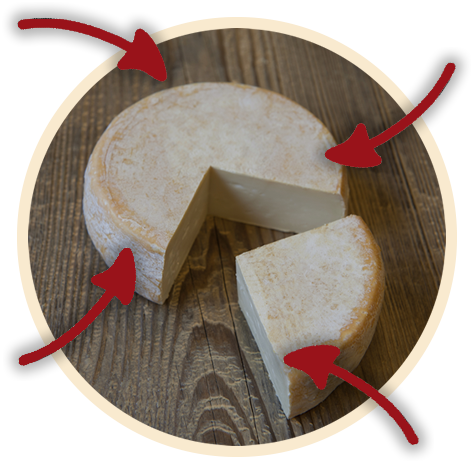 chevrotin-fromage-aop