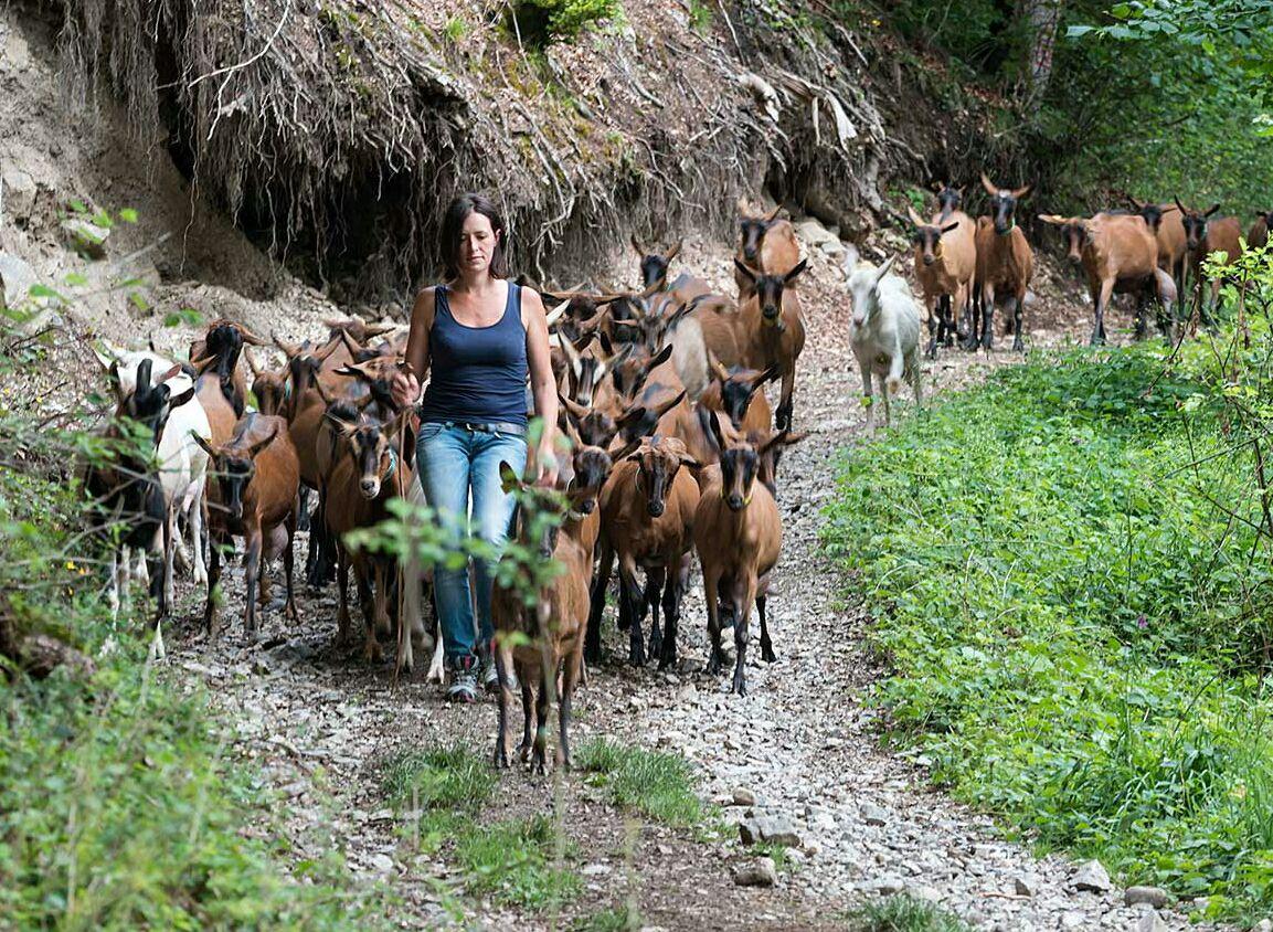 gaec le clos aux chèvres 2